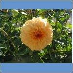Blumen (2)