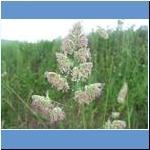Diverse Pflanzen
