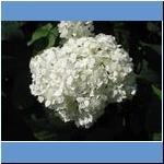 Blumen (1)
